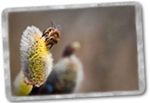 Alimentación de las abejas