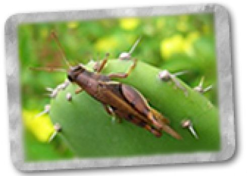Manejo de plagas, enfermedades y malezas