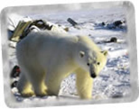 El barco Arctic Sunrise llegó al Glaciar Petermann