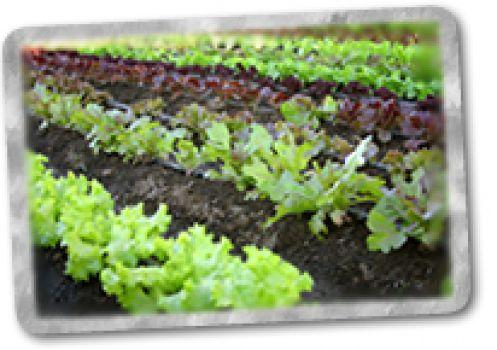 Agricultura orgánica al desarrollo sustentable