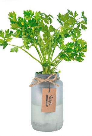 Kit de cultivo - Cilantro