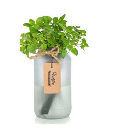 Kit de cultivo - Orégano