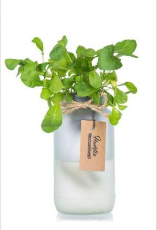 Kit de cultivo - Rúcula